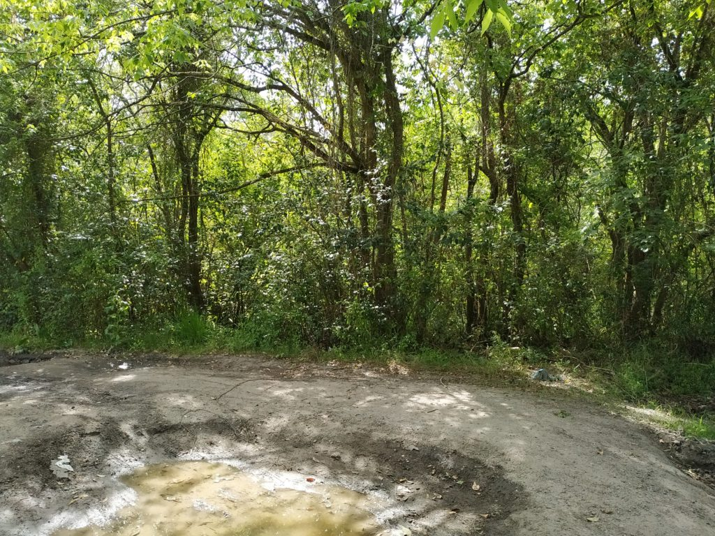 Ruta Provincial 19